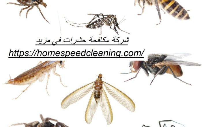 شركة مكافحة حشرات في مزيد